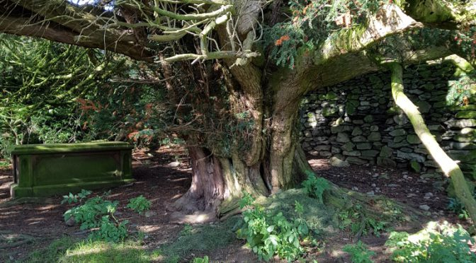 """The Immortal Yew"" – Some Thoughts"